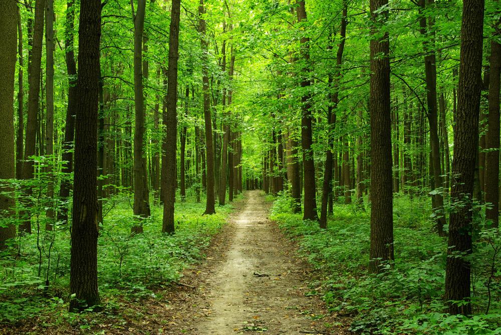 фото леса марий эл