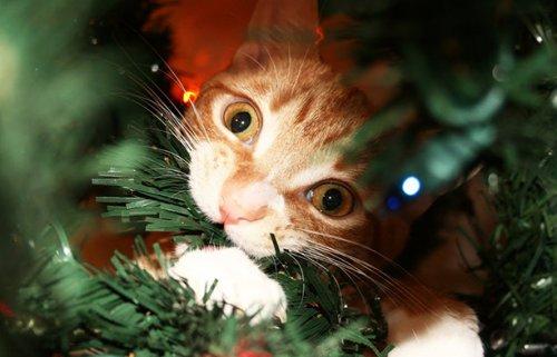 Как вы защищаете елку от котов и детей?