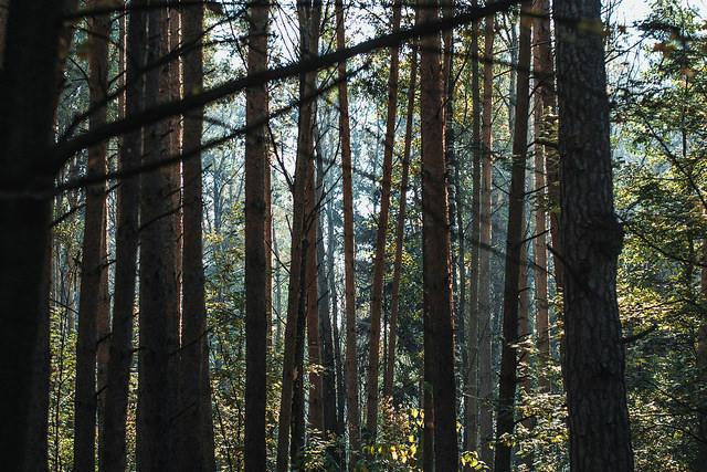 Ярославль хотят окружить зеленым поясом излесов ипарков