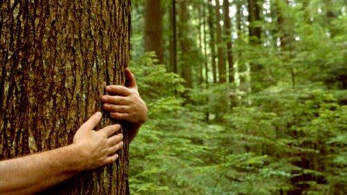 В Марий Эл «черные лесорубы» вырубили деревья на три миллиона рублей
