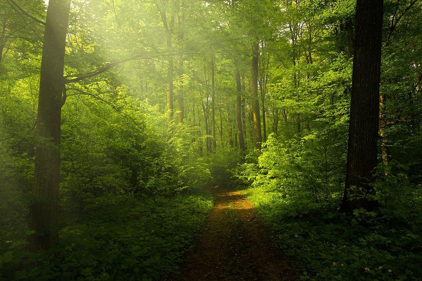 Заблудившуюся жительницу Новочебоксарска отыскали вмарийском лесу