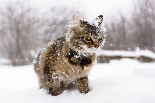 В Марий Эл в выходные выпадет снег