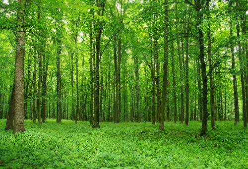 Что для вас лес?