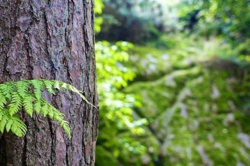 Волжский «Водоканал» ответит за загрязнение леса сточными водами