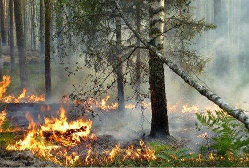 С начала пожароопасного сезона на территории Марий Эл  зафиксировано 17 лесных пожаров