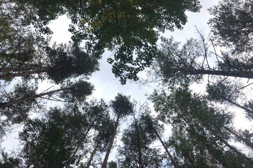 Главной причиной возникновения лесных пожаров в Марий Эл по-прежнему остаётся человеческий фактор