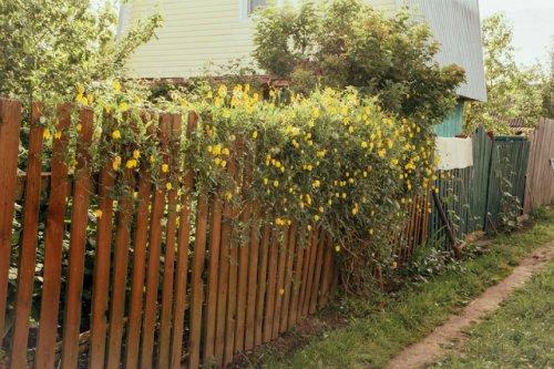 В Марий Эл продолжают регистрироваться кражи из садовых домиков