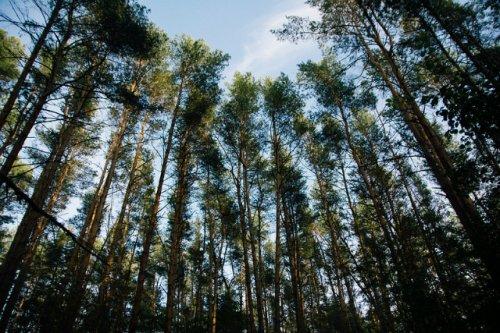 Мы ходим  в лес: