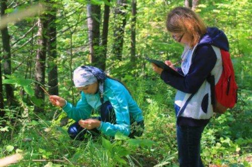 В Марий Эл специалисты оценили состояние редкого вида растений