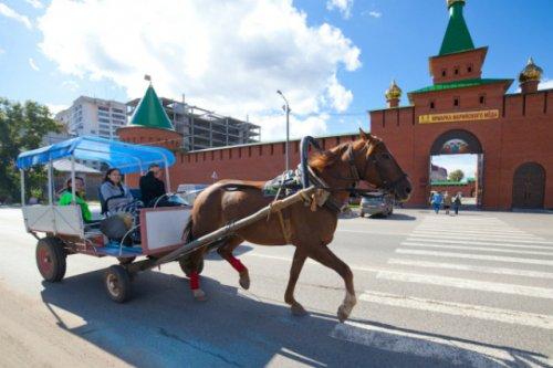 За организацию незаконных конных прогулок два человека оштрафованы на 8 тысяч рублей
