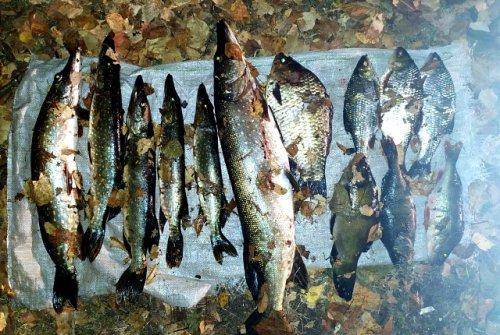На реке Волге чувашские полицейские поймали марийского браконьера