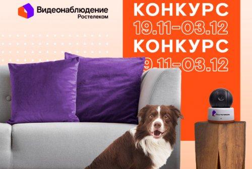 В главных ролях - ваши домашние любимцы: конкурс от «Ростелекома»