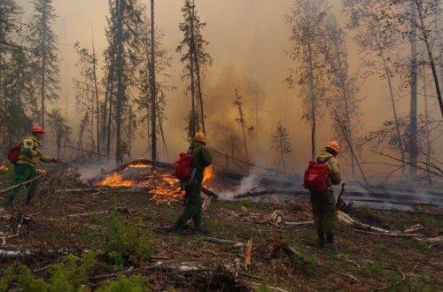 На страже безопасности лесов