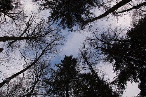 В Марий Эл продолжается подготовка к пожароопасному сезону в лесах