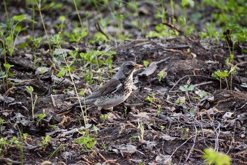 Специалисты посчитали, сколько в лесах Марий Эл зверей и птиц