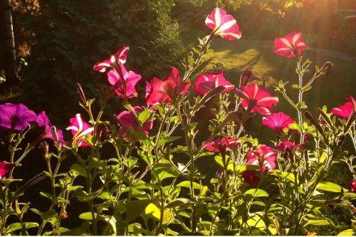 В рамках традиционных конкурсов в Йошкар-Оле выявят лучших цветоводов и озеленителей