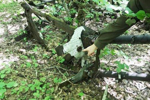 В лесах Марий Эл найдены останки самолёта времён Великой Отечественной войны