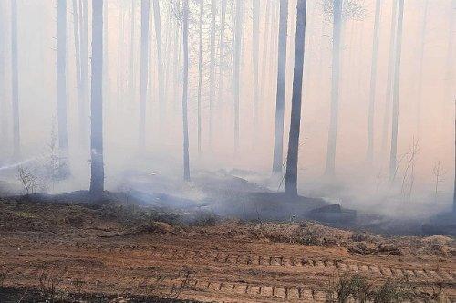 Ситуация с лесным пожаром в районе посёлка Сосновый Бор ухудшилась