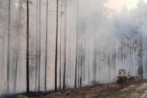 В связи с лесными пожарами в Республике Марий Эл введён режим чрезвычайной ситуации