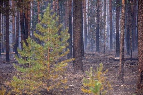 Спасатели заявляют, что группировка сил и средств по тушению лесных пожаров в Марий Эл увеличивается