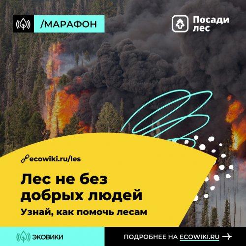 Онлайн-марафон против лесных пожаров
