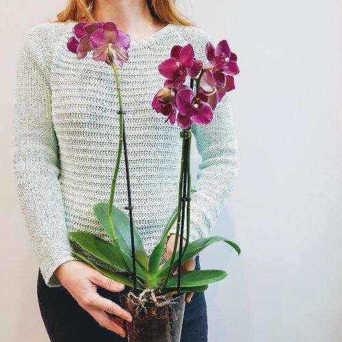 Выбираем живые цветы в горшочках