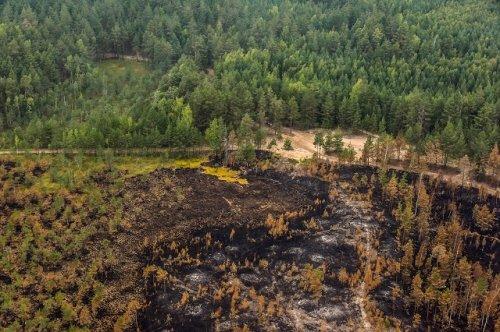 Режим чрезвычайной ситуации, введённый в Марий Эл из-за лесных пожаров, будет снят 7 сентября