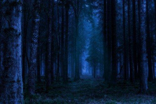 В Марий Эл спасатели более четырех часов искали ночью заблудившегося в лесу мужчину