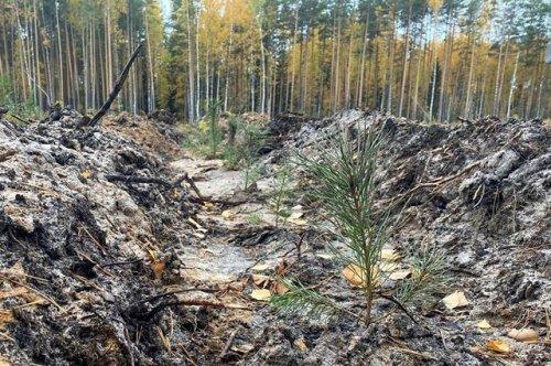 В рамках проекта «Сохраним лес» на территории Куярского лесничества появилась аллея «Мы вместе»