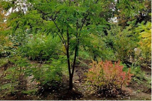 В ботаническом саду ПГТУ бесплатно отдают в добрые руки семнадцать крупных растений