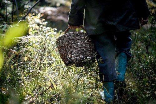 За два дня спасатели Марий Эл пять раз выезжали на поиск людей, заблудившихся в лесу